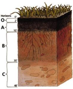 Как определить состав и плодородие почвы на даче