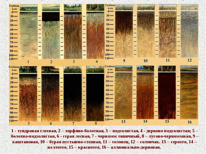 Дождевые черви и другие способы улучшения состава почвы