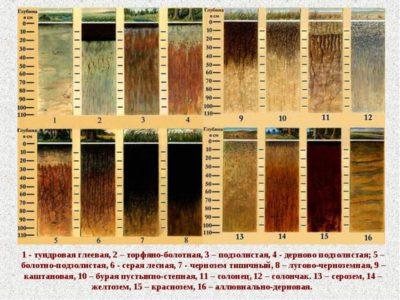 Плодородие почвы. Как определить состав и плодородие почвы на даче