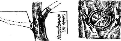 правила обрезки