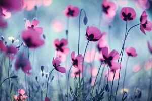 цветы по Фэн-шуй