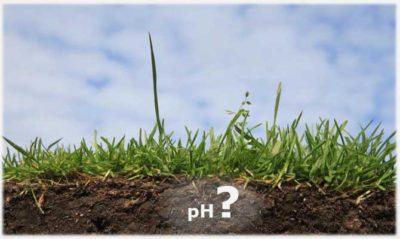 Кислотность почвы и известкование - улучшаем активность почвы