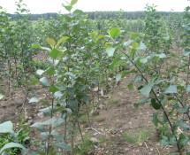 Питомники Беларуси. Плодовые растения