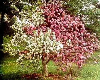 Май – основные работы дачника в саду.