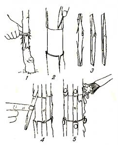 Окулировка, прививка «мостиком» и др. боковые прививки