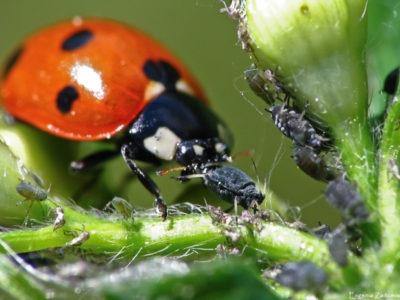 Биологический способ защиты растений. Микроорганизмы и паразиты