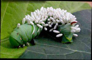 биологический способ защиты растений