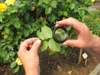 Физико-механический способ защиты растений. Работы зимой и не только