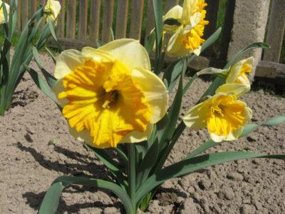 Цветы в мае. Основные работы дачника в палисаднике