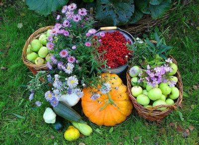 Потребности семьи на даче. Сад и огород на 4 человека