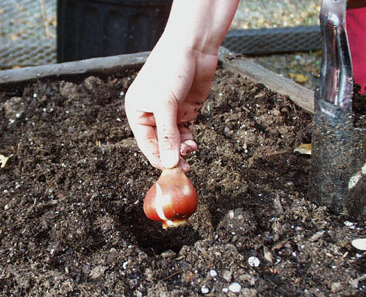 Октябрь. Работы садовника в палисаднике. Часть 2.