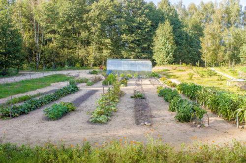 Севооборот и добрососедство  – два столпа хорошего урожая