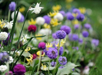 Весеннецветущие луковичные растения