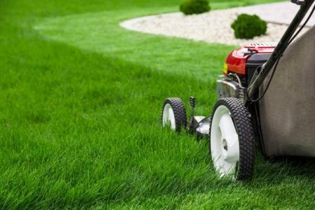 Консультация садовника-агронома