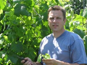 Что такое побег замещения на винограде, каково его значение