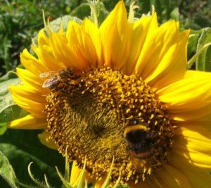 Семинар пчеловодов «Пока пчелы не летают»
