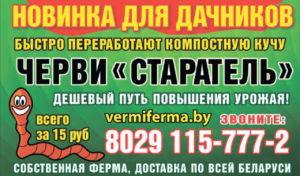 Штамбовая малина в Беларуси