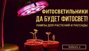 Пилильщики на плодовых и ягодных культурах