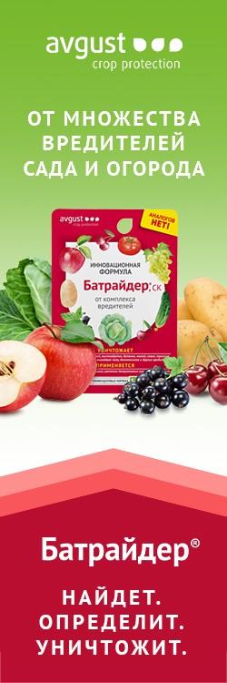 Сорта грецкого ореха выращиваемые в Беларуси
